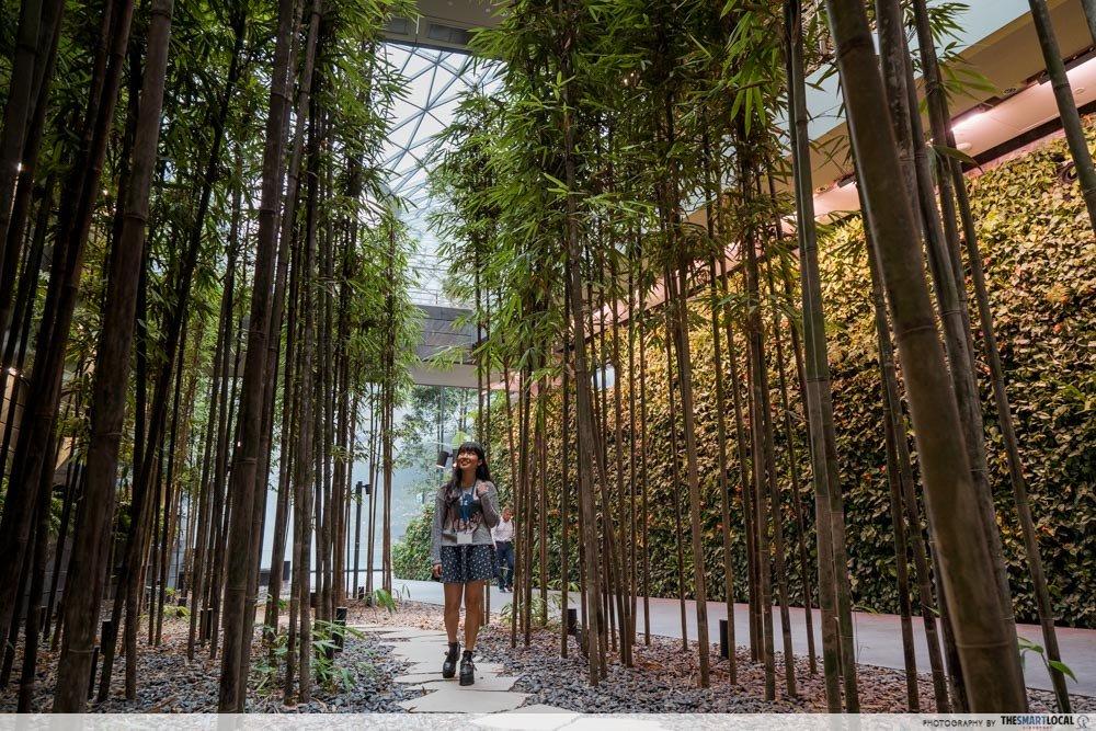 森林谷-星耀樟宜景点