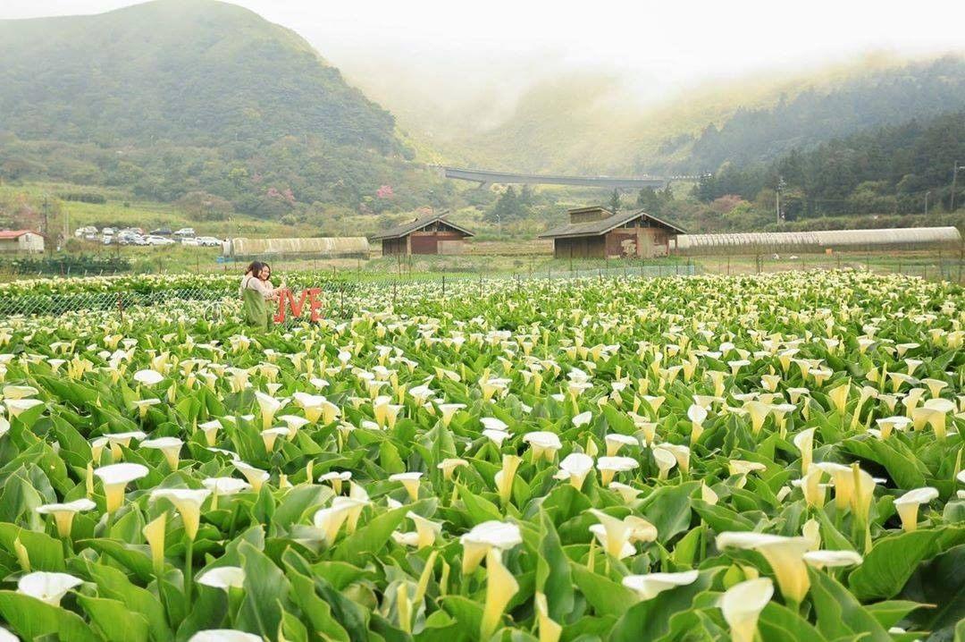 竹子湖-台湾精彩行程
