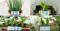 在家里也能种出的8种 室内蔬菜 ,自己种的菜自己吃