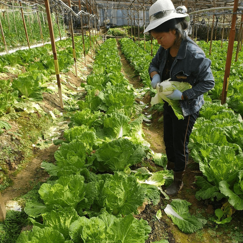 全发有机农业