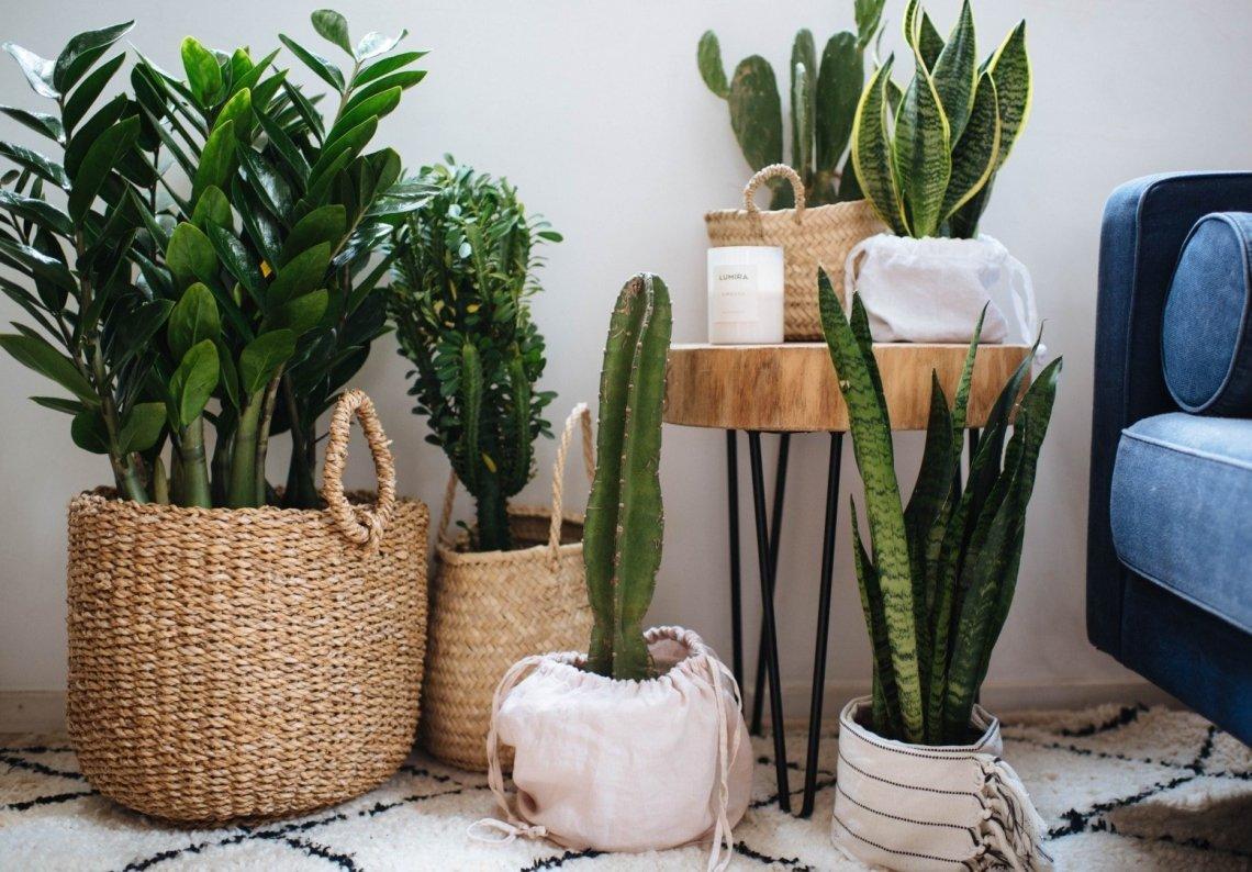 清洁植物 - 清洁妙招
