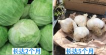 10 种 保质期最长的蔬菜 ,除了防止食物浪费还能帮你省钱